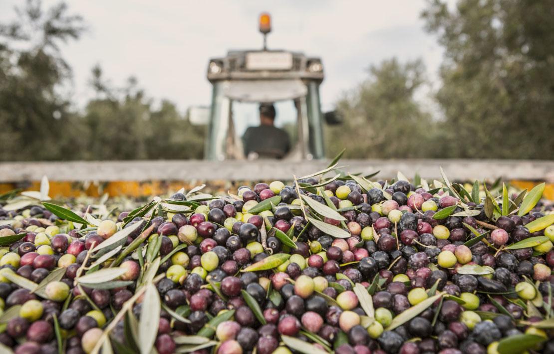 La-Masrojana-Oliven-Spezialitaeten
