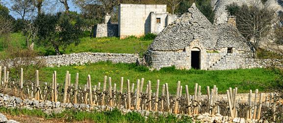 Vigne-del-Maestro-Puglia-Cielo-e-Terra