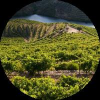portwein-marsala-sherry-suesswein