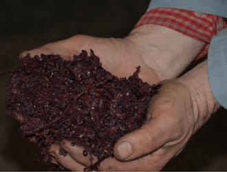 vinivinos-grappa