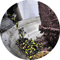 olivenoel-oliodioliva-olioextravergine-oliven-oliva
